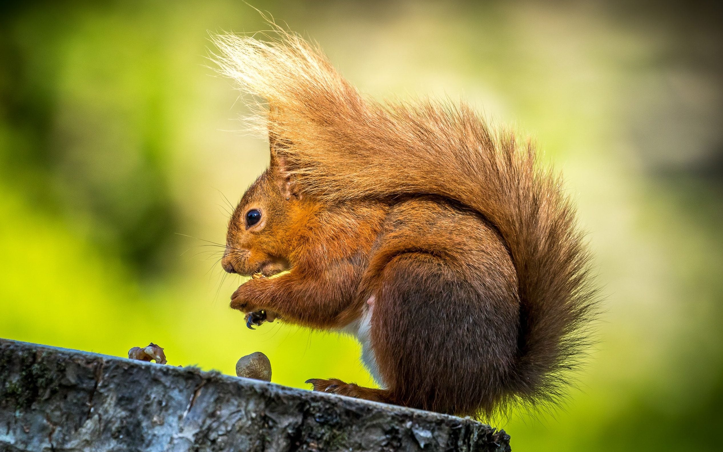 Squirrels could hold secret to preventing brain damage for stroke patients