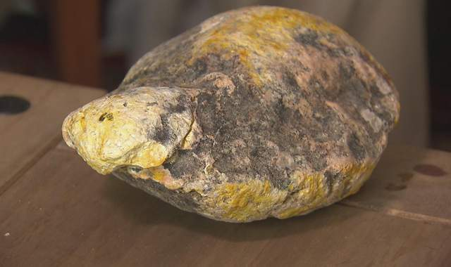 Whale vomit price - photo#5
