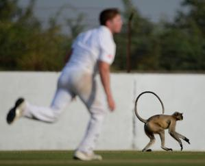 Monkeys on the field can add to the excitement of cricket in India. (Photo by Gareth Copley/Getty Images)