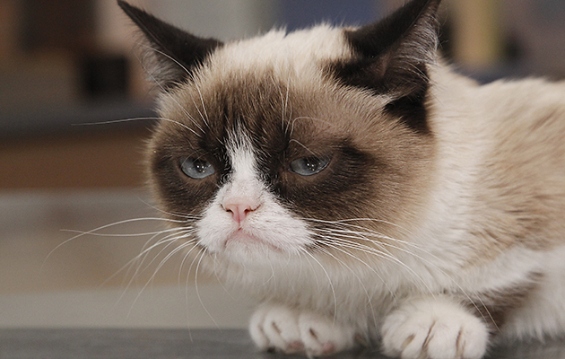 Grumpy Cat (Photo: ABC/Getty)