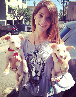 Ashley Greene shows off her new puppies (Twitter)