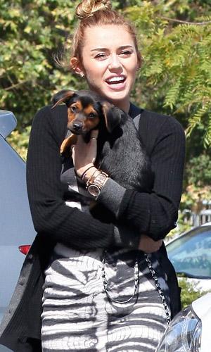 Miley looks happy with Happy. (RS/X17online.com)