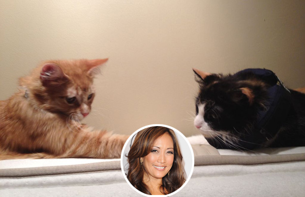 Two of Carrie Ann Inaba's six rescued cats, Bubble and Maile. (Twitter)