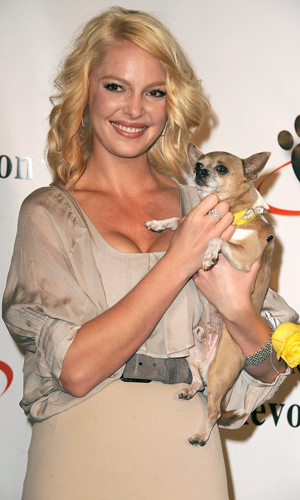 Katherine Heigl's Hounds of Hope saves dogs from kill shelters. (Steve Granitz/WireImage)