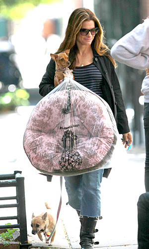 Sandra Bullock adopted a two-legged dog and a three-legged dog. (INFDaily.com)