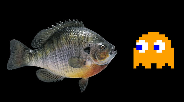 Now even fish are playing video games