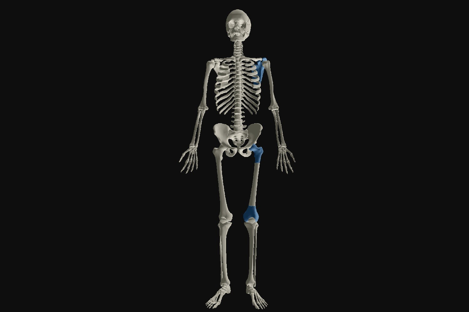 3D-scanned 'trillennium man' predicts what evolution has in store for us