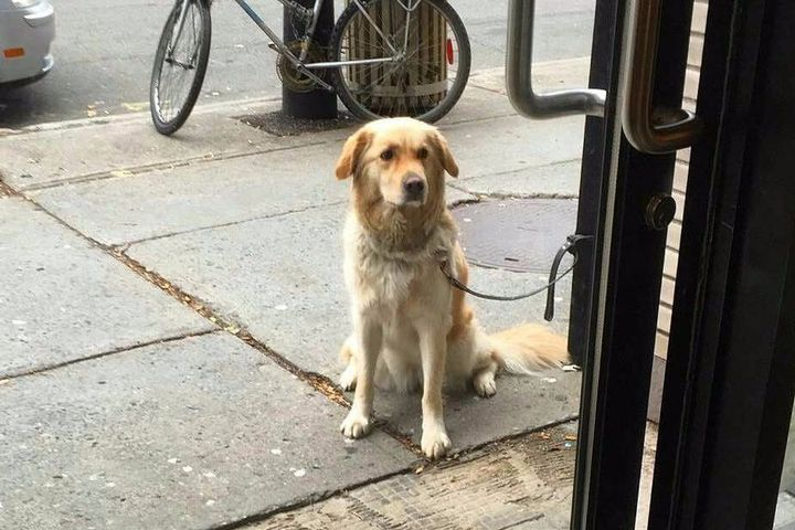 'Sad Dogs Outside Shops' Facebook page is a must-follow for pupper lovers