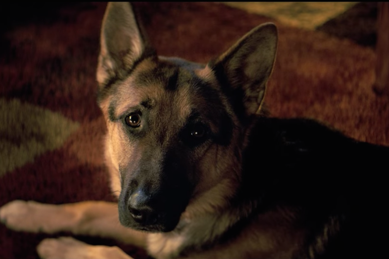 Footage of apparent animal cruelty on movie set spurs boycott of A Dog's Purpose