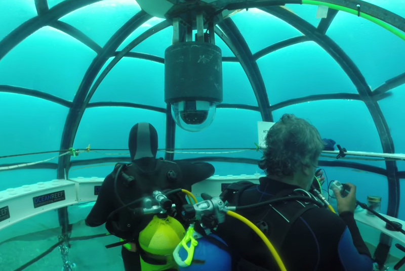 Time to stare at a live feed of this underwater garden