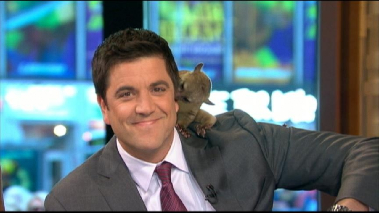 Good Morning America Xfinity Channel : Josh elliott celebrity tvguide