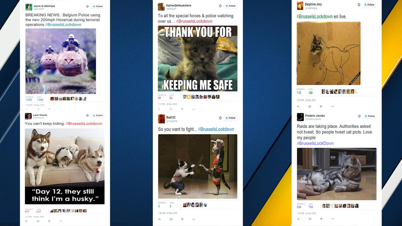 #BrusselsLockdown: Belgians tweet photos of cats during raids in solidarity with police