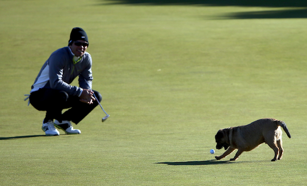 Paul Casey and the culprit. — Getty Images