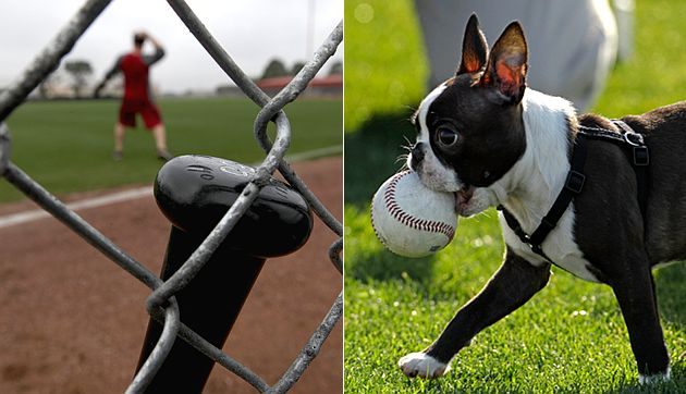 An unsuspecting bat is left unattended as Tanner Scheppers' dog adorably makes off with a baseball. (AP)