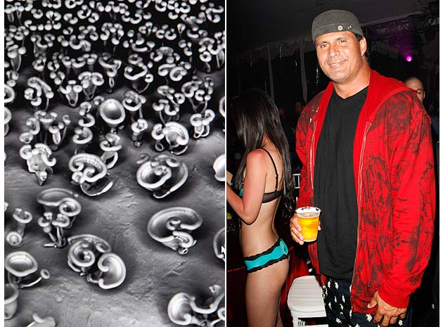 Nano flowers and Jose Canseco. (Getty)