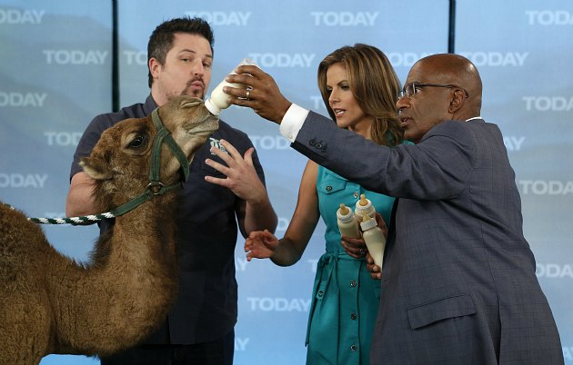 Al Roker feeds a camel (NBC NewsWire/ Getty).