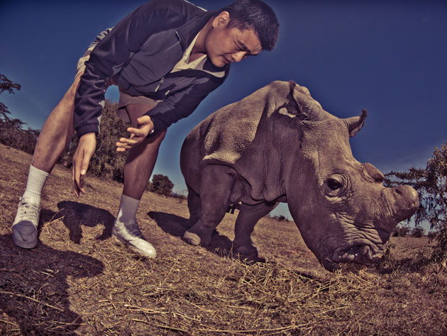 Yao Ming gets up close and personal with a rhino. (Photo by Kristian Schmidt for WildAid, via yaomingblog.com)