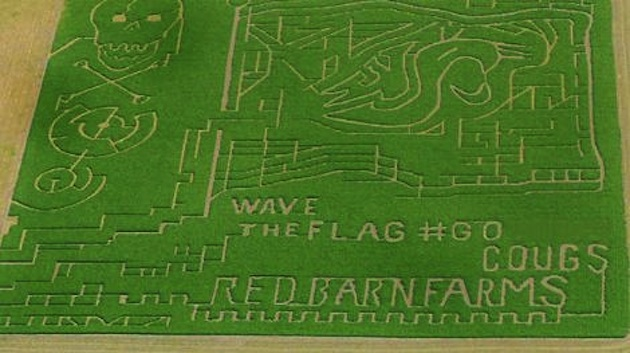 Washington State fans get in on the corn maze craze