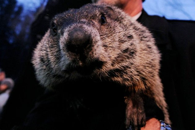 Punxatawney Phil, how could you (or your fellow groundhogs)? — Getty