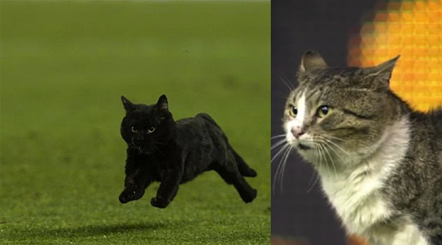 Catles Puryol, the Camp Nou cat (left) and Andy Cattoll, the Anfield cat.