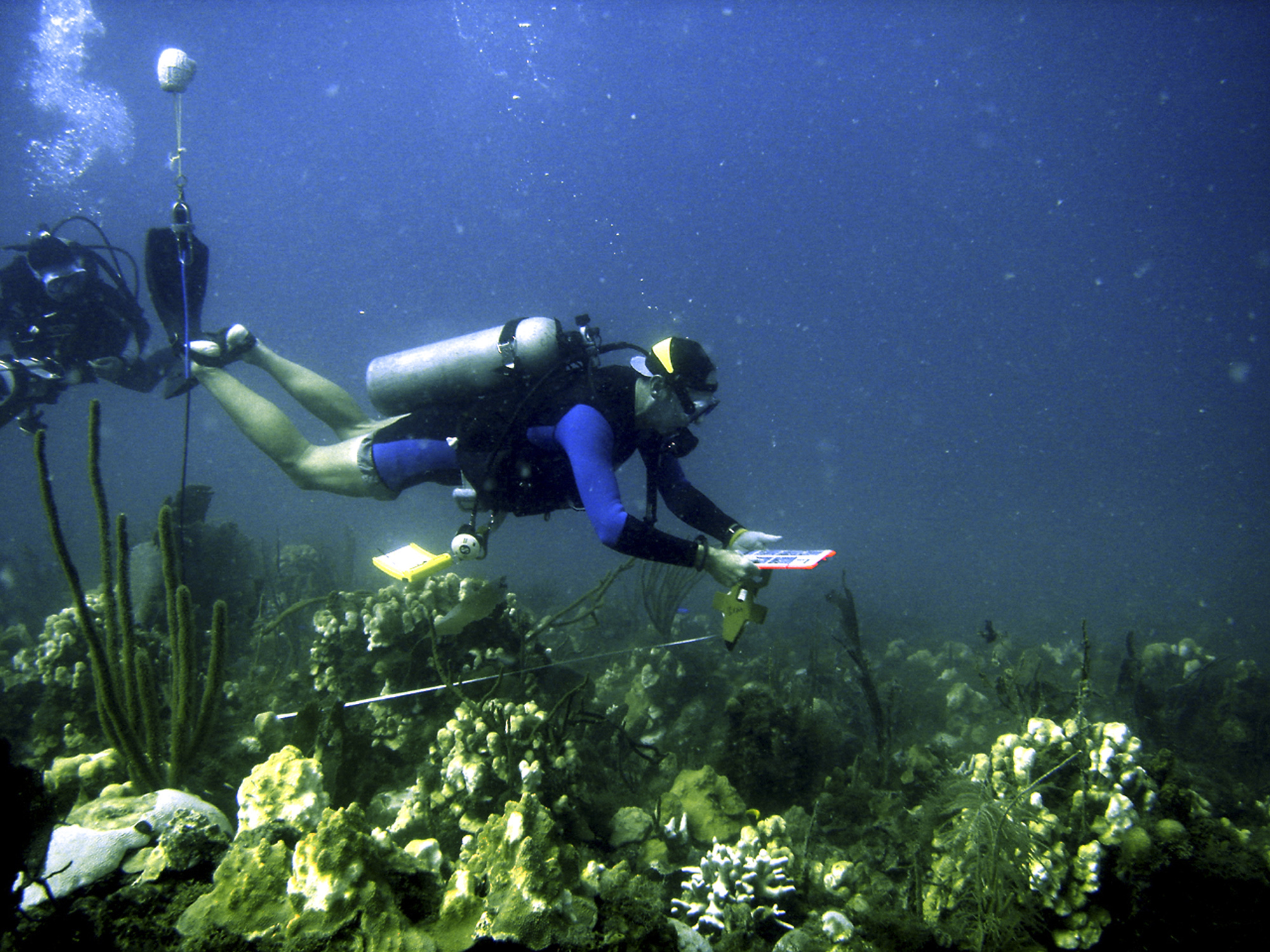 A diver along a reef in the Caribbean (AP File photo)
