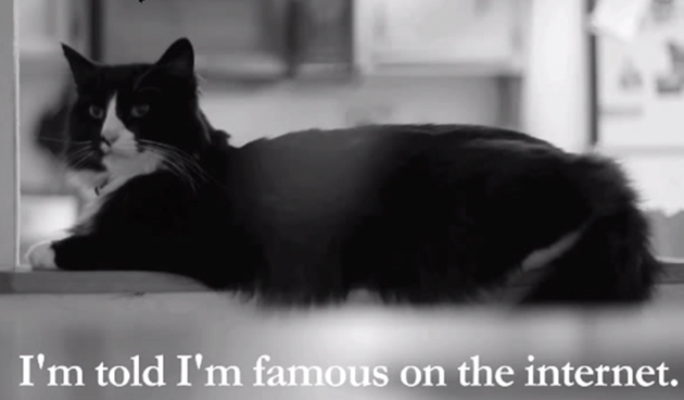 A screenshot of Henri le Chat Noir (via YouTube)