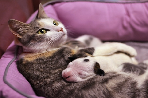 Cat nurses a newborn pit bull. (Cleveland Animal Protective League/AP)