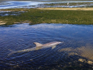 "A Russian news report clains a trio of ""armed"" dolphins have escaped into the wild (Australian AP)"