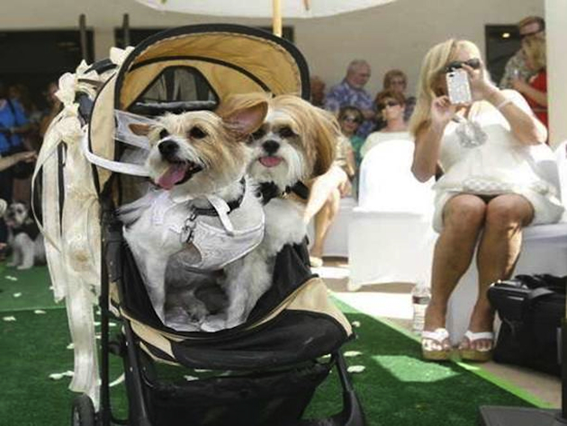Scruffy Rubin and Snickers Carter getting married (Wade Byars/The Desert Sun)