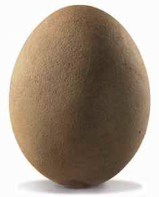 This fossilized elephant bird egg sold for more than $100,000. (Christie's)