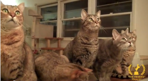 Some of this year's Friskies finalists, eagerly awaiting the results (YouTube)