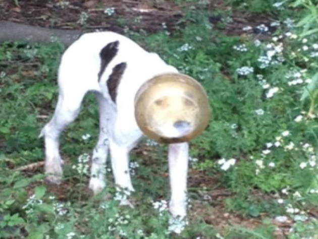 A stray dog spotted in Memphis with its head trapped inside a container (Beth Gresham/Facebook)