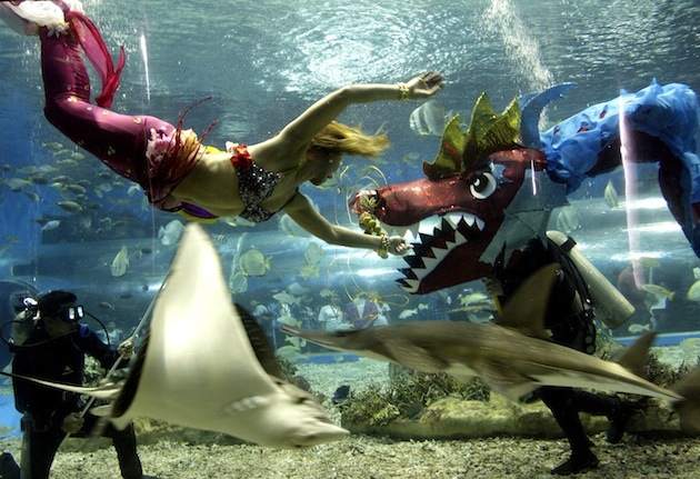 A woman dressed as a mermaid swims at Manila's Ocean Park in the Philippines. (Pat Roque/AP)