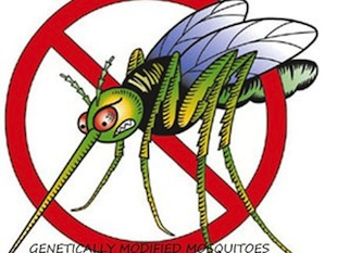 An image from the mosquito petition site (Change.org)