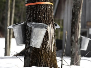 Syrup is serious business in Quebec, which houses a reported $30 million worth of maple syrup. (Yahoo!)