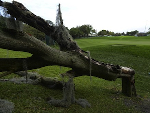 Fallen trees have long been a risk but trees themselves rarely return gunfire (AP)