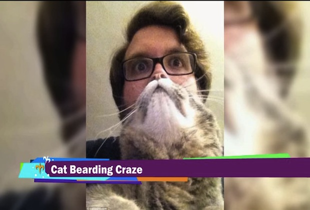 Cat bearding sweeps the Web (AP/WGNO)