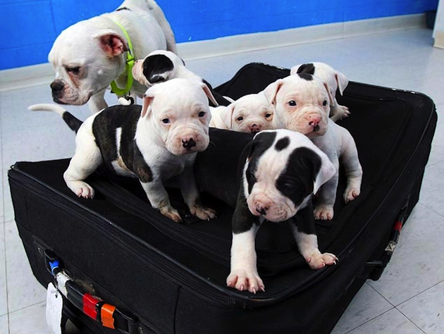 Six puppies, mother at Toledo-area Humane Society (Dave Zapotosky/The Blade via AP)
