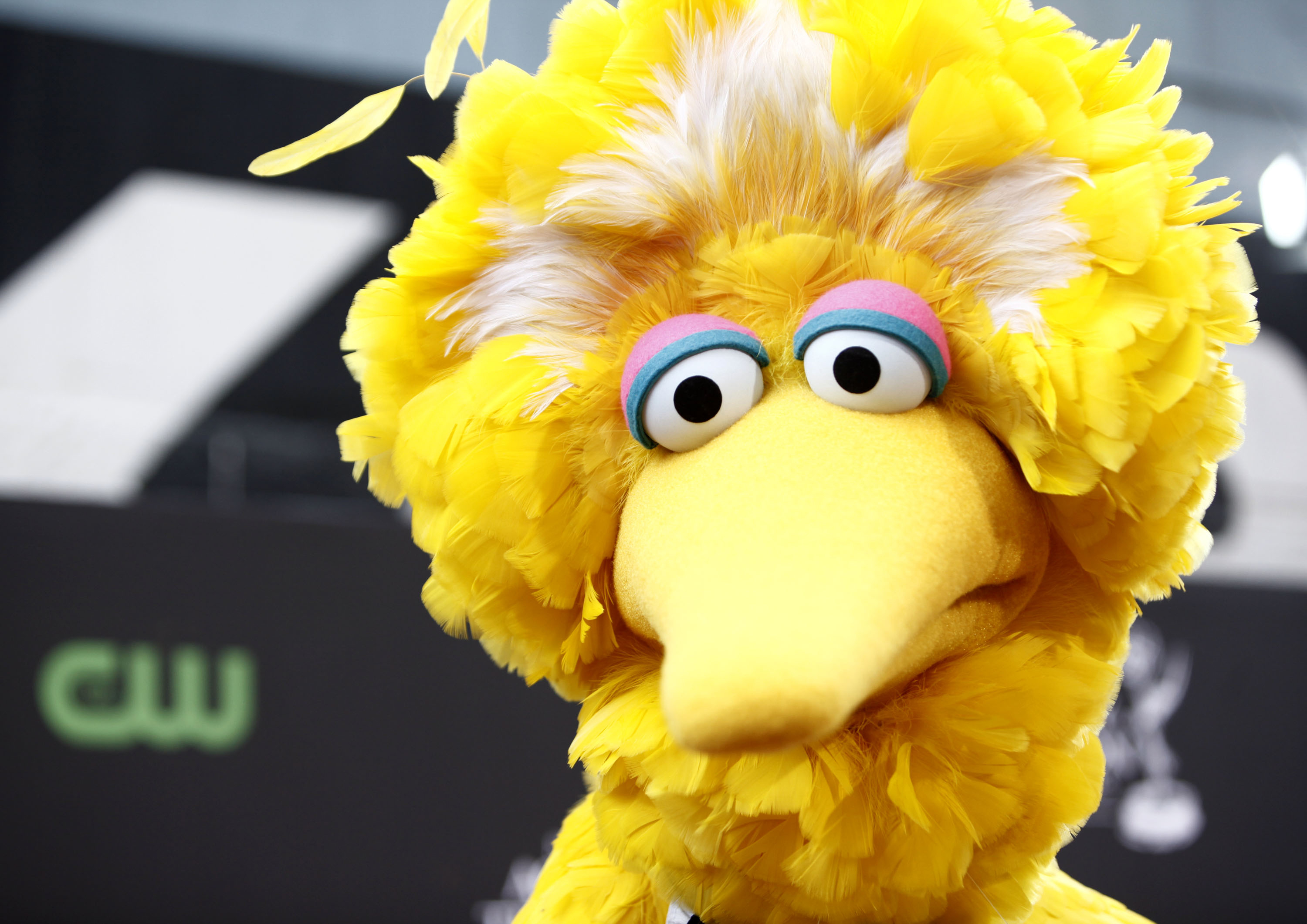 Big Bird (Matt Sayles/AP)