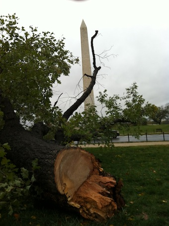 Fallen tree on the National Mall (Chris Moody/Yahoo! News)