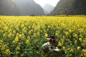 Healthier farm living? (Cancan Chu/Getty images)