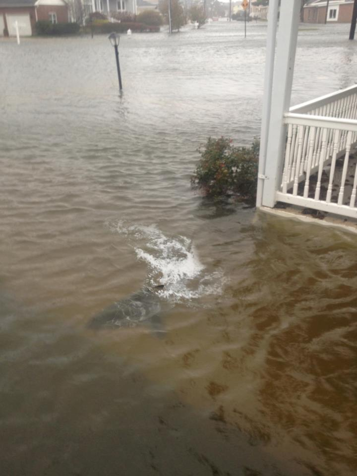 Photo uploaded by New Jersey resident supposedly showing a shark in the water outside of his home