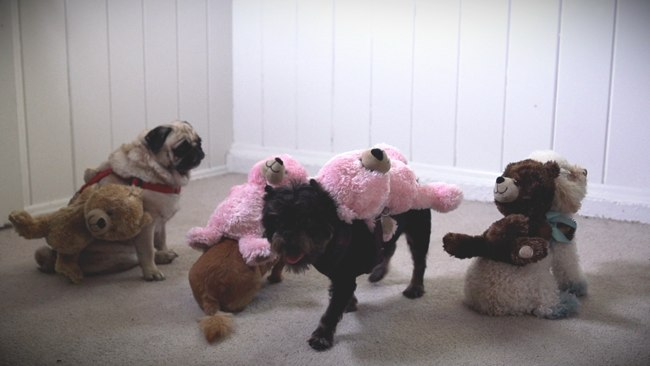 Can't Be Tamed: Miley's New Video Gets Parodied by Pooches