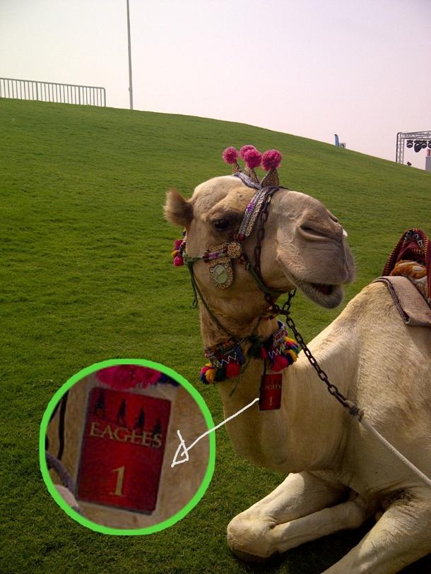 Camel backstage at The Eagles concert in Dubai.