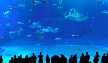 水族館約會