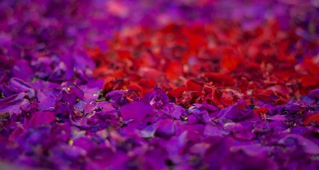 Bali 037 - Ubud - spa-water flower pedals