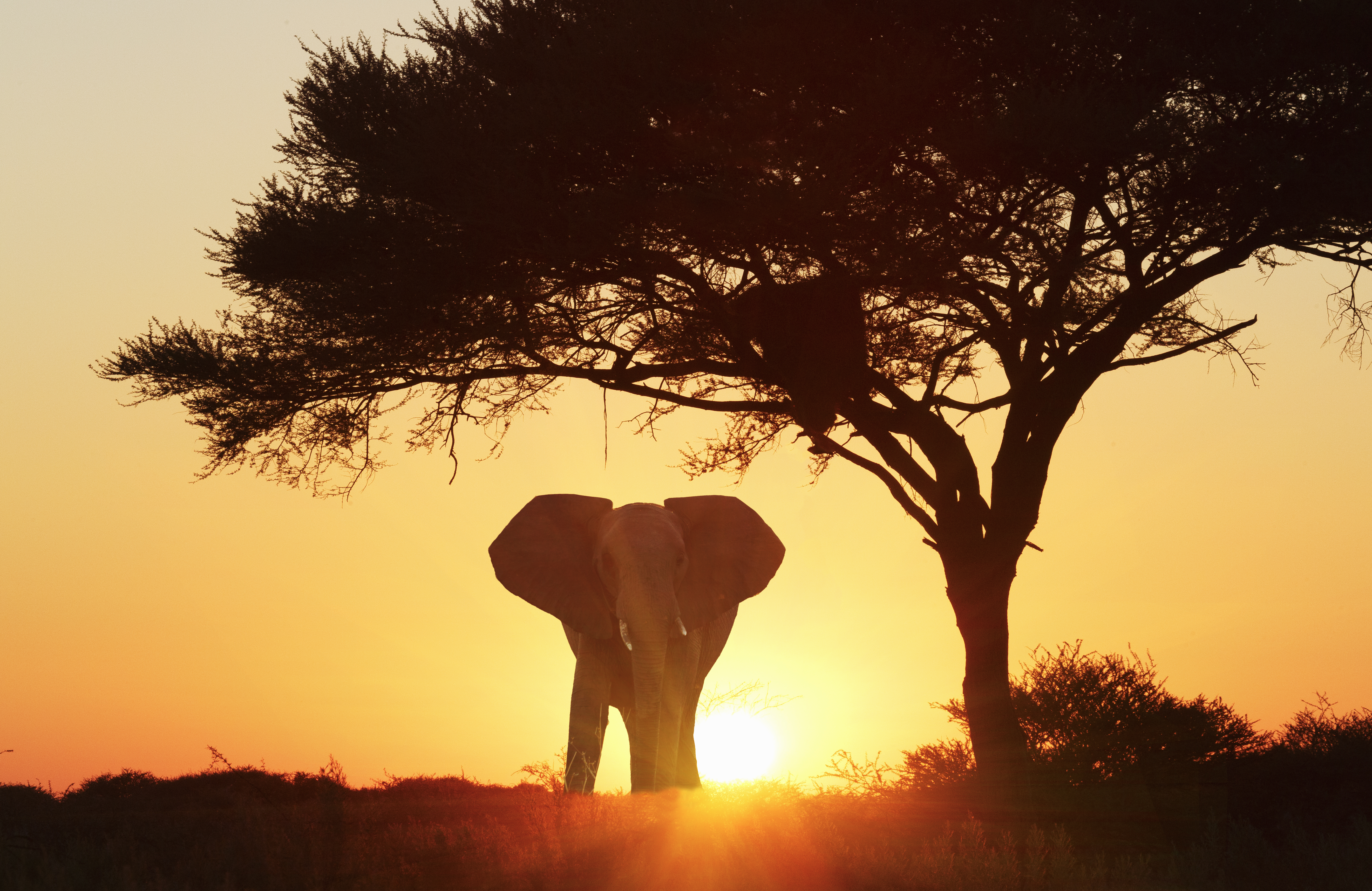 White House says decision to lift ban on elephant hunting trophies from Africa has not been 'finalized'