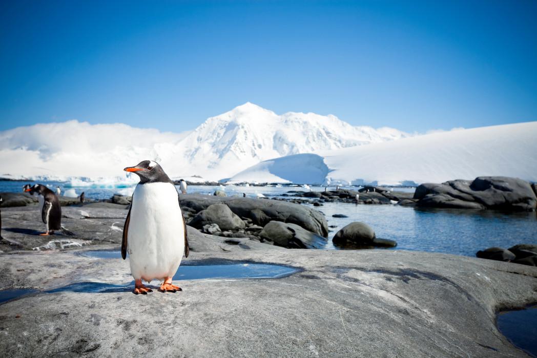 iceberg and penguin