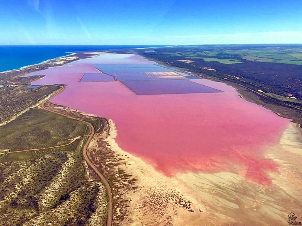 『澳洲。西澳』 Hutt Lagoon 赫特潟湖 / 北粉湖|鳥瞰世界上最夢幻的粉紅湖,更是西澳自然絕景之一 ,浪漫到讓人想戀愛的草莓牛奶湖。|雄獅 玩轉西澳七日 粉紅湖 沙漠小探險之旅