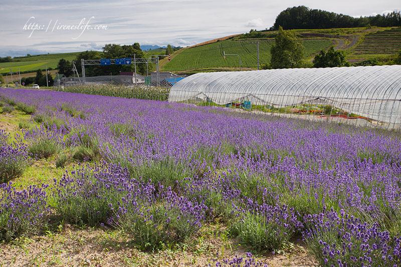 Kanno Farm 菅野農場